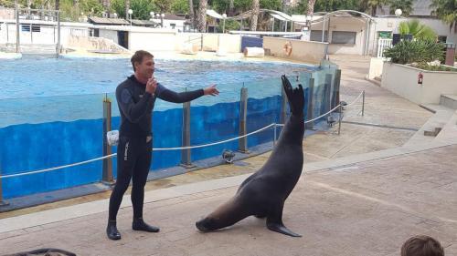 La Pineda Delfinshow