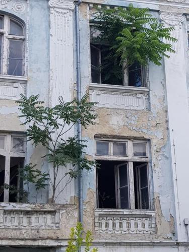 Tomt hus i Varna - træerne gror ud af vinduerne